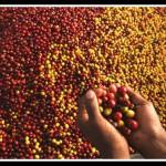 Происхождение кофейных зерен