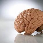 Кофе поддерживает мозг в тонусе