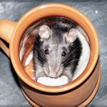 Кофе усиливает жажду секса