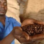 Планета кофе: Мексика