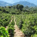 Планета кофе: Экваториальная Гвинея