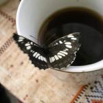 Как правильно хранить, заваривать и пить чай — Советы экспертов
