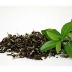 Зеленый чай избавляет от ночных кошмаров