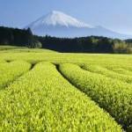 В каких случаях зеленый чай вреден